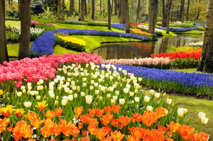 Beau Colorful Flower Garden
