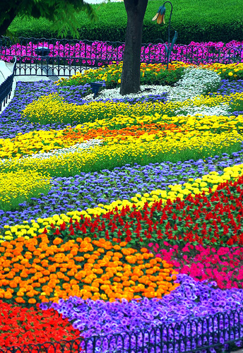 bright and colorful flower garden