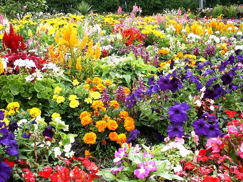 Photos of pretty flower gardens flower garden pictures for Flowers landscape gardening