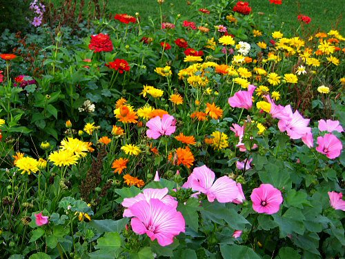 Summer flower garden picture