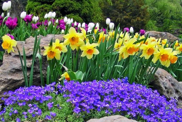 Flower garden pictures pictures of beautiful flower gardens pretty spring flowers mightylinksfo Images
