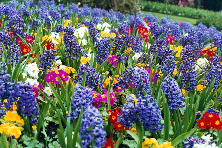 Flower garden pictures pictures of beautiful flower gardens spring flower garden with hyacinths mightylinksfo
