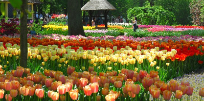 Flower garden pictures pictures of beautiful flower gardens tulip flower garden mightylinksfo